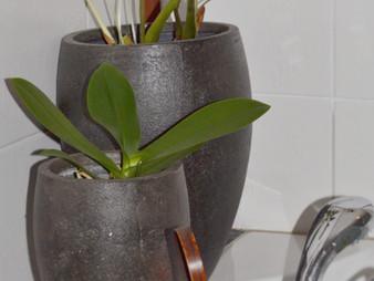 Huonekasveista ja vähän muustakin