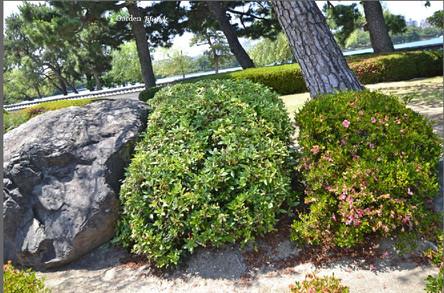 Rivin_Garden_Lifestyle_kivet_ja-Pensaat_