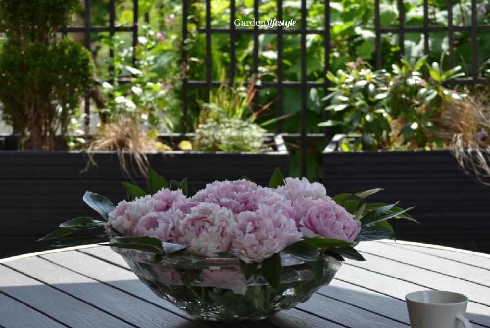 Kartell bowl with Sarah Bernhardt peonies