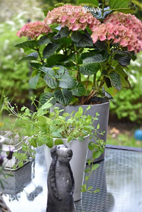 Rivin_Garden_Lifestyle_hortensia_108.jpg