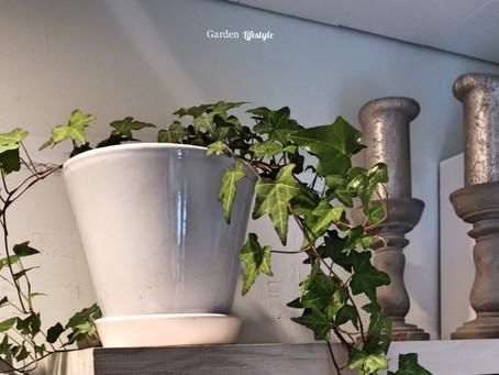 Tiesitkö tätä viherkasveista?