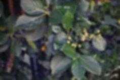omenapuun leikkus pihalla