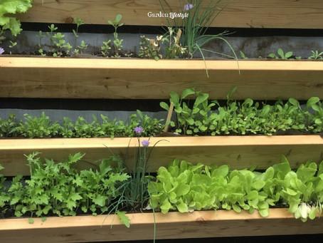 Juhannusruokaa omasta puutarhasta
