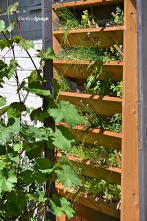 Rivin_Garden_Lifestyle_kasviseinäke_119