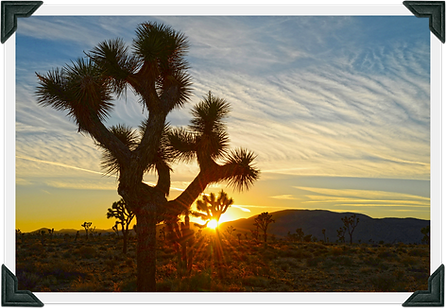 Joshua Tree Background with Frame.png