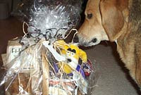 """""""Brinkley checking out some new gifts!"""" - Elizabeth"""