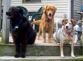"""""""I discovered your treats today at the Stormville Flea Market. Remy, Oliver Lewis and Dudley  LOVED Dixie's Bacon & Cheddar drops!"""" - Marlene"""