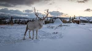 Nordick Wild