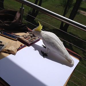 'cocky want to draw ?'