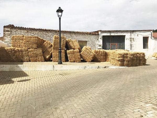 'well-stacked' Sanlúcar de Guadiana