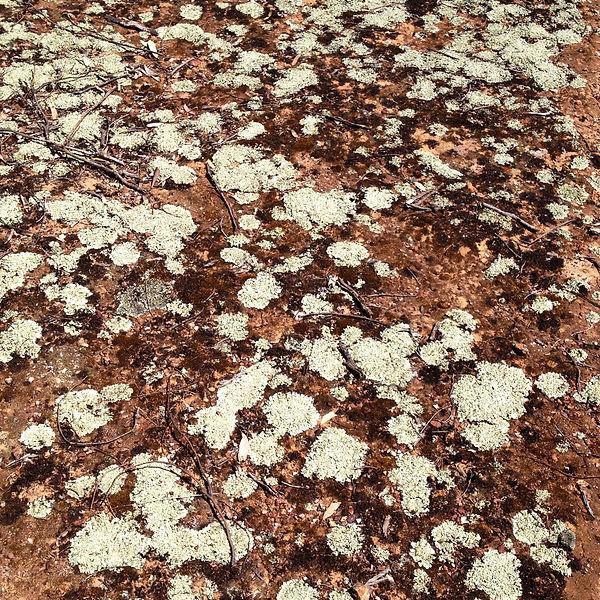'lichen them' Gariwerd