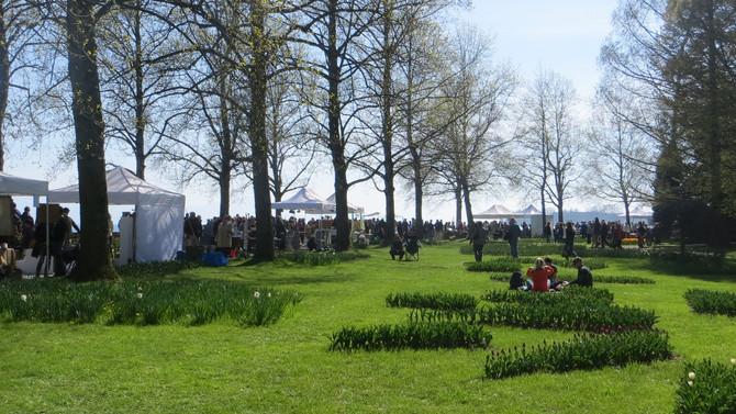 80 potiers dans les tulipes (Morges-Suisse)