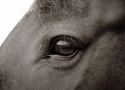 Horse photography, stables