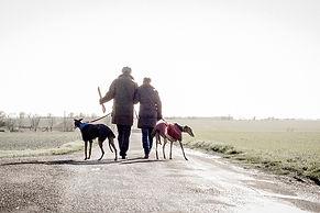 dogs, walker, country lane