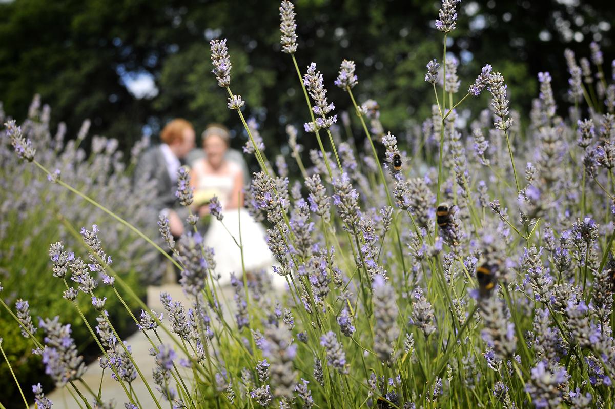 Bumble bees, bride, Lavender, Mere