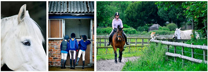 Stables and riding school photography