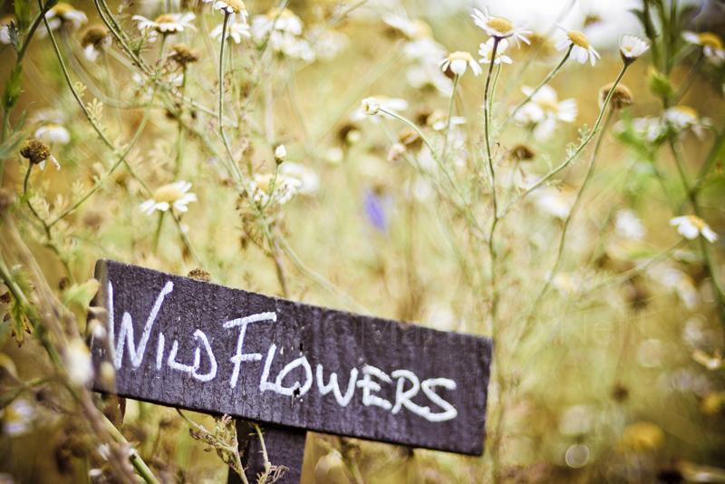 Flowers, Wedding, Willington