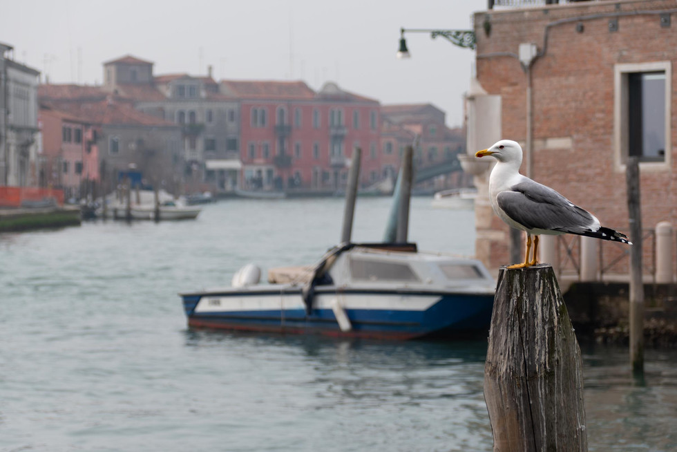 2020_02_23_13_02_09_IT-Venezia-Murano.jp