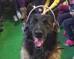 Animation et mediation animale chiens maine et loire Angers Brissac Educateur canin education canine 49 enfants cynophobie handichien handicap peurs