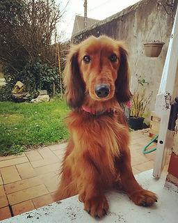 brissac cours éducation canine angers éducateur canin 49