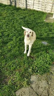 Garde chien famille les forets d'opale 49 educateur canin angers education canine