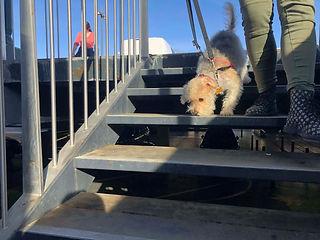 avis les forets d'opale angers vauchrétien brissac educateur canin education canine 49 garde animaux