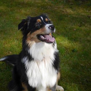 avis cours collectifs education canine les forets d'opale educateur canin angers brissac 49