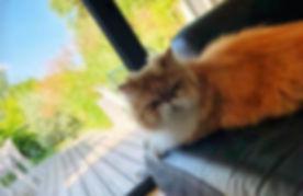 petsitter angers visites domicile chat c