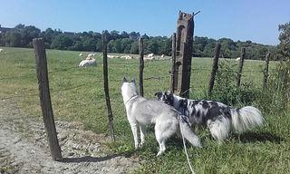 François Ségard garde chiens angers 49 chat brissac education canine positive educateur canin diplome