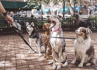 education canine angers educateur canin 49 diplome d'etat cours collectif brissac