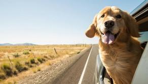 Transporter votre animal c'est bien. En sécurité, c'est mieux !