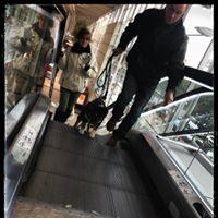SEGARD FRANCOIS education canine angers