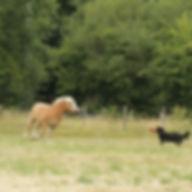 visites à domicile animaux maine et loire educate canin angers 49 brissac education canine petsitter petsitting pension club canin