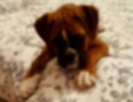 Avis garde chien angers chat brissac 49 education canine educateur professionnel canin maine et loire
