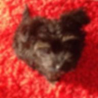 AVIS FORETS d'OPALE educateur canin Angers education canine brissac garde animaux 49.jpg
