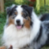 agility pistage éducation canine chien angers educateur canin brissac 49