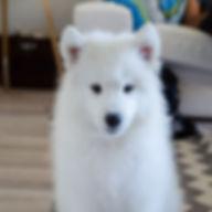 Avis comportement canin angers comportementaliste educateur Brissac education canine 49