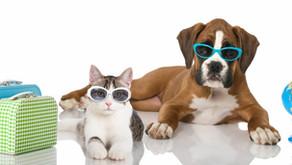 Garde chien et chat en famille d'accueil Angers Brissac 49 - Bien préparer son séjour :