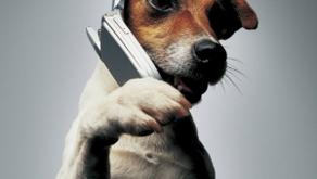 Consultation téléphonique éducation canine comportementalisme Angers Brissac 49