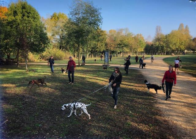 education canine angers educateur canin
