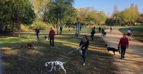 Education canine Collective - détails et programme