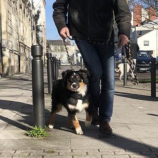 education canine angers 49 educateur canin françois ségard Brissac