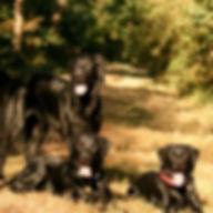 famille d'accueil petsitter professionnel angers petsitting brissac 49 educateur canin education canine