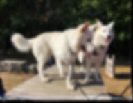 brissac 49 educateur canin Avis les forets d'opale angers education canine comportementaliste.jpg