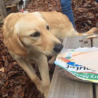 cours éducation canine angers 49 maine et loire educateur canin professionnel comportement
