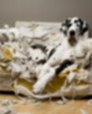 Comportementaliste professionnel education canine educateur canin Angers Brissac 49