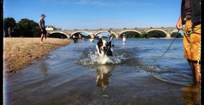 Cours collectifs d'Education canine Angers Brissac 49 - Solde de votre abonnements collectif