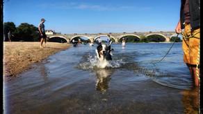 Cours collectifs d'Education canine Angers Brissac 49 - Solde de votre abonnement collectif
