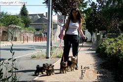 Visites animaux promenades angers-2