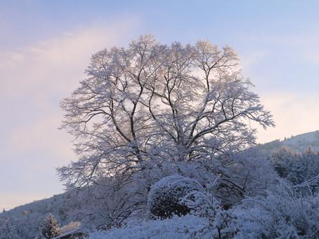 L'Ardèche sous la Neige !